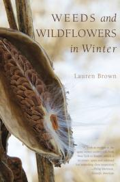 New Book: Weeds and Wildflowers in Winter