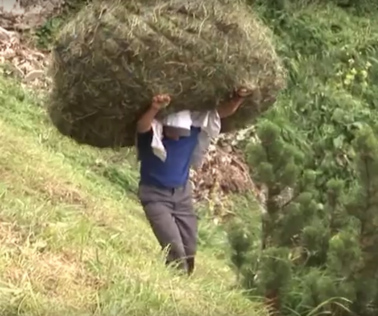 Video: Modern traditional Swiss haymaking on a steep grade